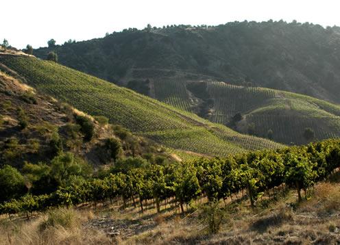 Valle del Cachapoal, Rancagua - CHILE