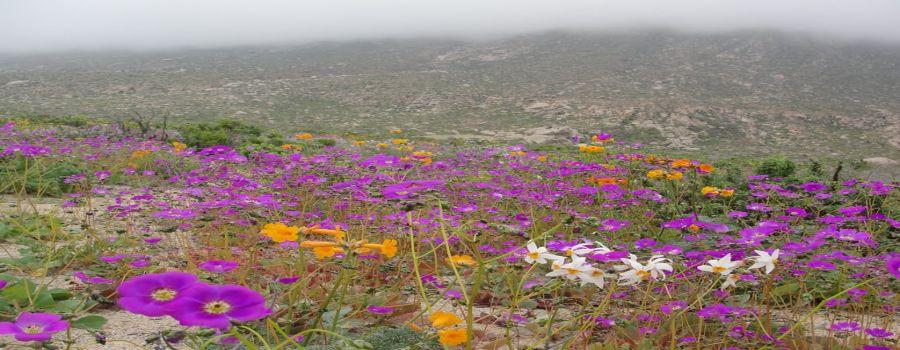 Parque Nacional Llanos de Challes