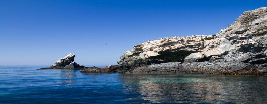 Reserva Nacional Pinguino de Humboldt