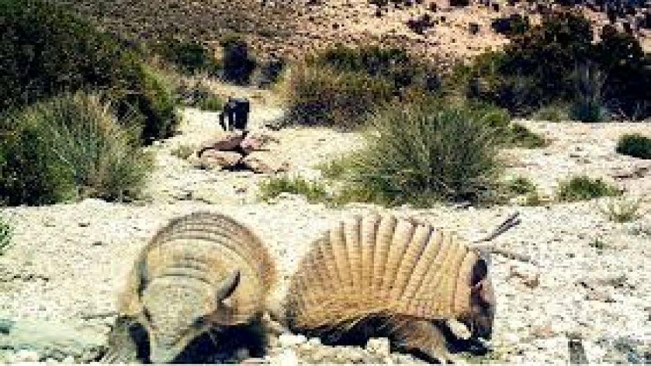 fauna chile: