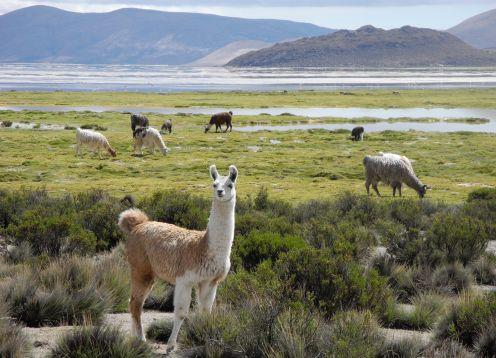 Reserva Nacional Las Vicunas