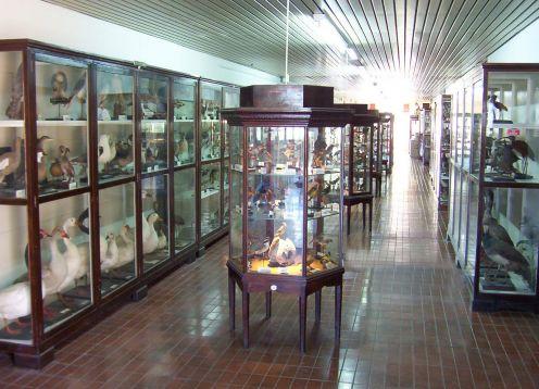 Museo de Ciencias Naturales Domingo Faustino Sarmiento