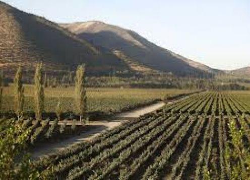 TOUR DEL VINO UNDURRAGA Y SANTA RITA. Santiago, CHILE