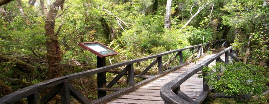 Image result for parque nacional chiloe
