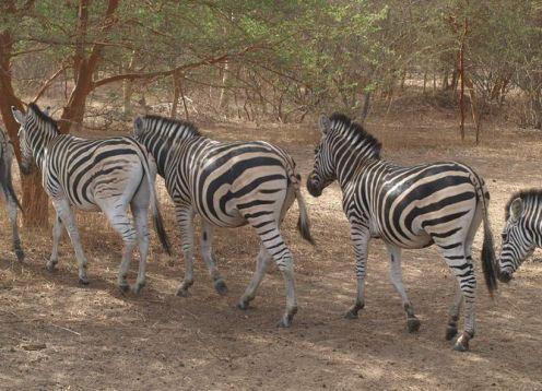 Meio dia para Laguna Somone e Safari no Parque Bandia desde Dakar. Dakar, SENEGAL