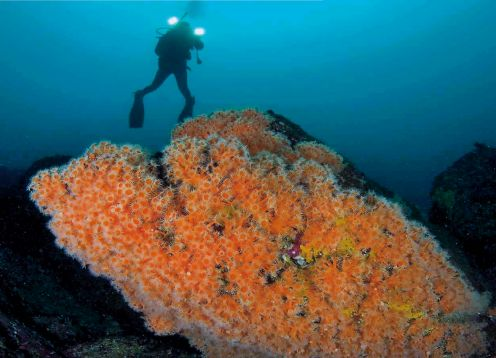 Bautismo Submarino en Punta de Choros. ,