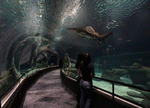 Evite linhas. Entrada para o aquário AquaRio. Rio de Janeiro, BRASIL