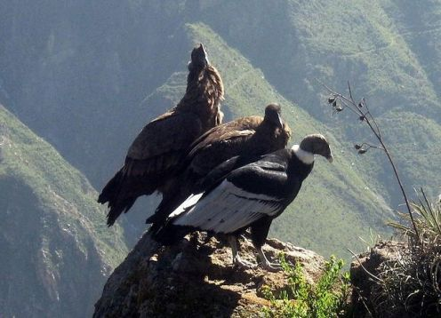 Tour to the Colca Canyon in 2 days, starting and ending in Arequipa. Arequipa, PERU