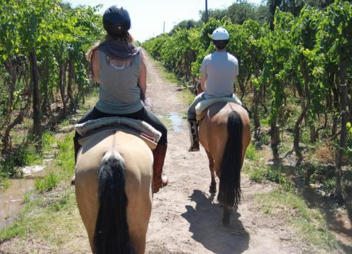 Horseback riding through vineyards with gourmet roast lunch. Mendoza, ARGENTINA