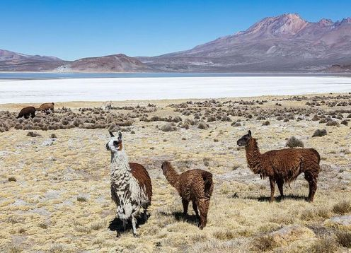 Full day tour to Salinas lagoon from Arequipa. Arequipa, PERU