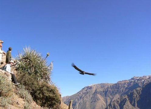 Colca Canyon  and Puno from Arequipa. Arequipa, PERU
