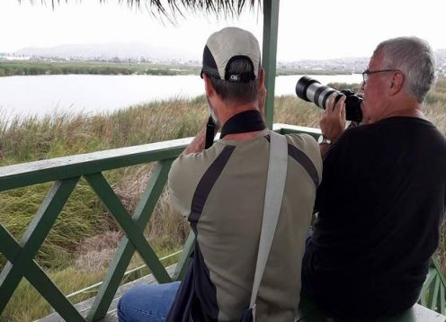 Visit the Pantanos de Villa wildlife refuge in Lima. Lima, PERU