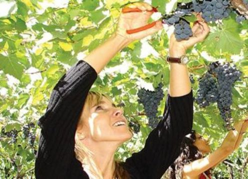 Half-day luxury wine tasting tour in Mendoza. Mendoza, ARGENTINA