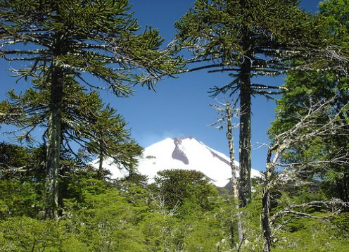 CONGUILLIO NATIONAL PARK TREKKING . Pucon, CHILE