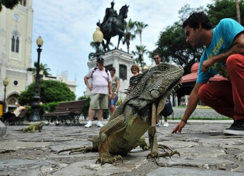 Tour of the city of Guayaquil and the Historical Park. Guayaquil, ECUADOR