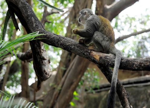 Tour al zoológico El Pantanal en Guayaquil. Guayaquil, ECUADOR