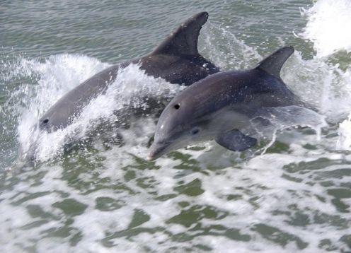 Ecotour de manatíes y aventura. Tour en Naples FL.. Naples, FL, ESTADOS UNIDOS