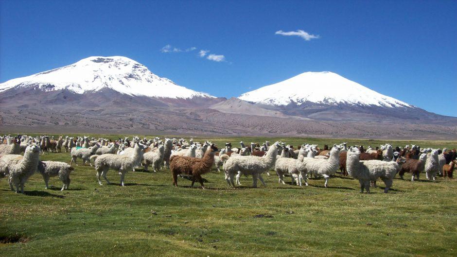 PARQUE NACIONAL LAUCA - LAGO CHUNGARA, Arica - Chile